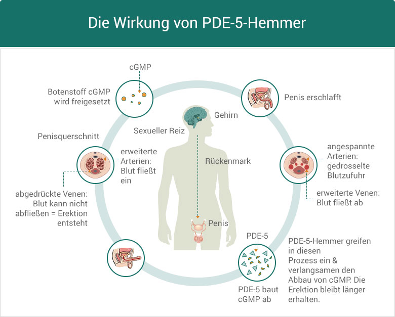 PDE5 Hemmer Wirkung